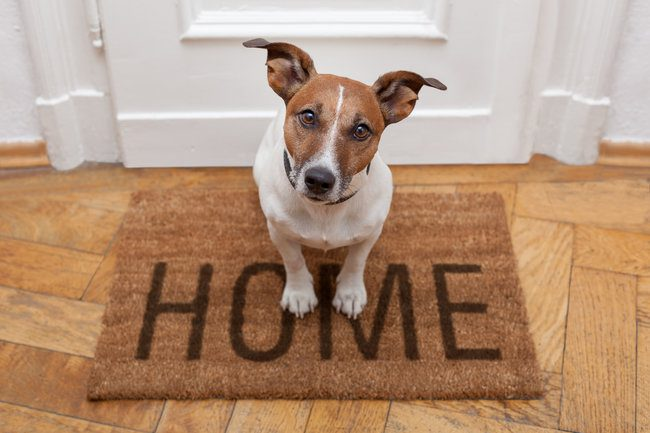 Make sure your pet has its own space.