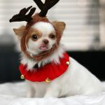 Puppy Named GG Dresses Up for Christmas