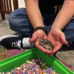 Pet Hamster Named Princess Rodriguez