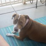 Dog Lays Outside On The Patio
