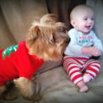 Terrier Baxter Makes Baby Laugh On Couch