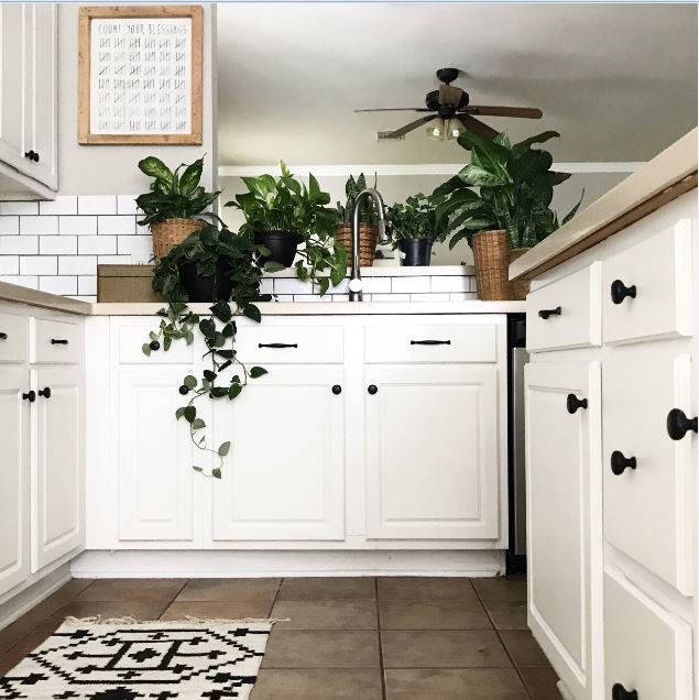 kitchen-plants