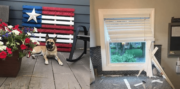 Dog destroyed wood window blinds