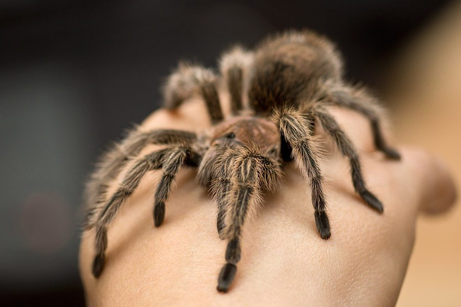 Spiders like this one top the list of people's top 10 fears