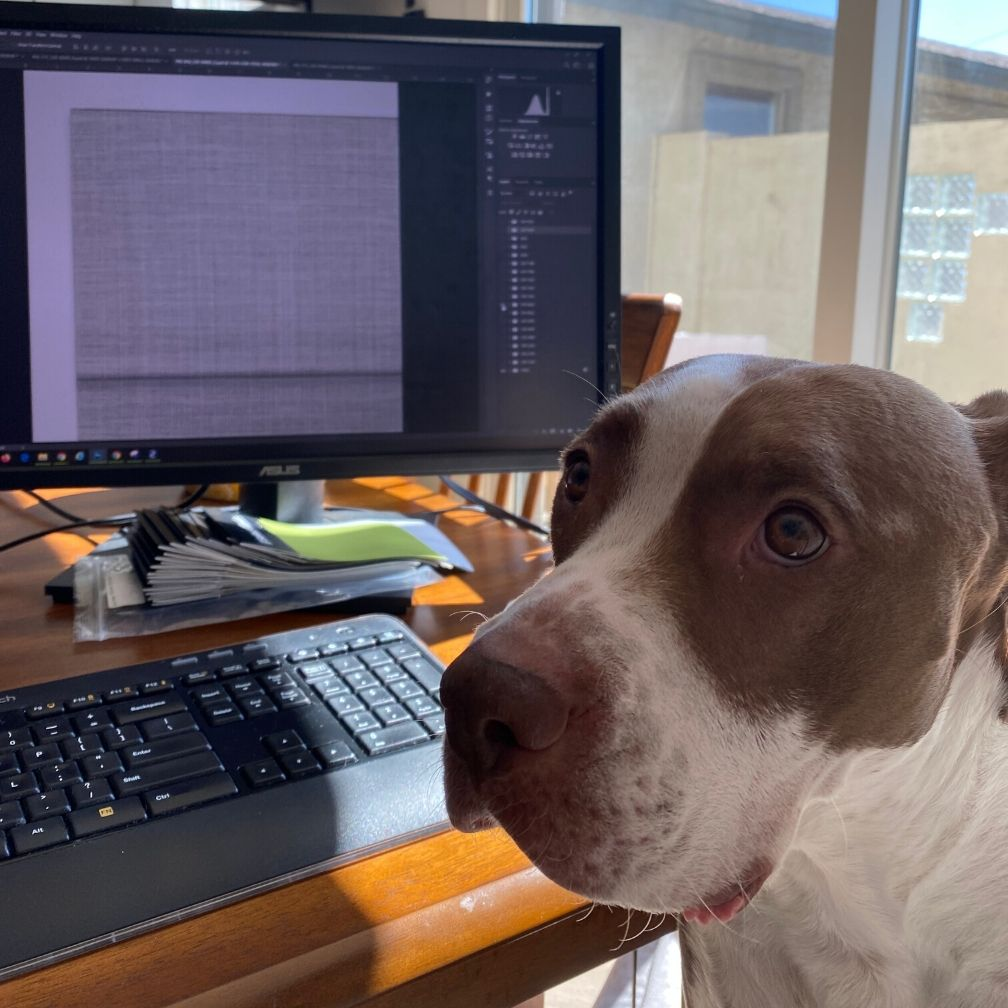Coqboy the dog helps his mom work from home.