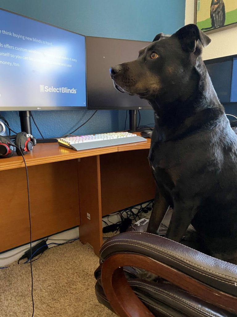 Stella the dog sits in her dad's chair to help him get through the day.